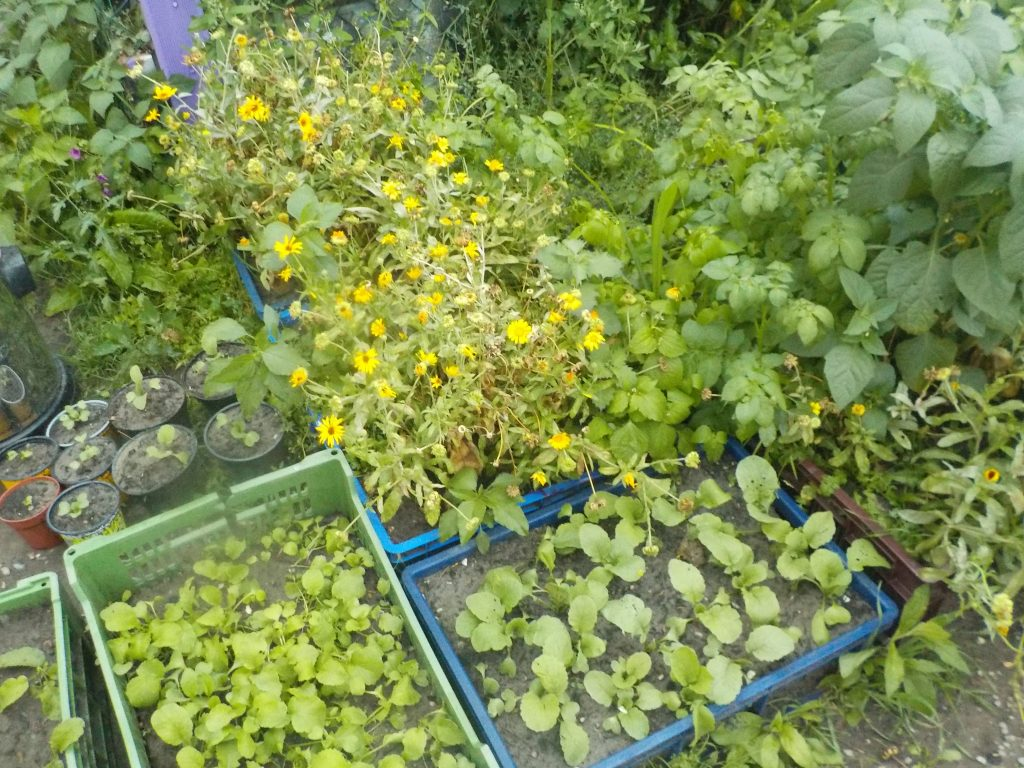 This picture shows a garden plot with vegetables and herbs.