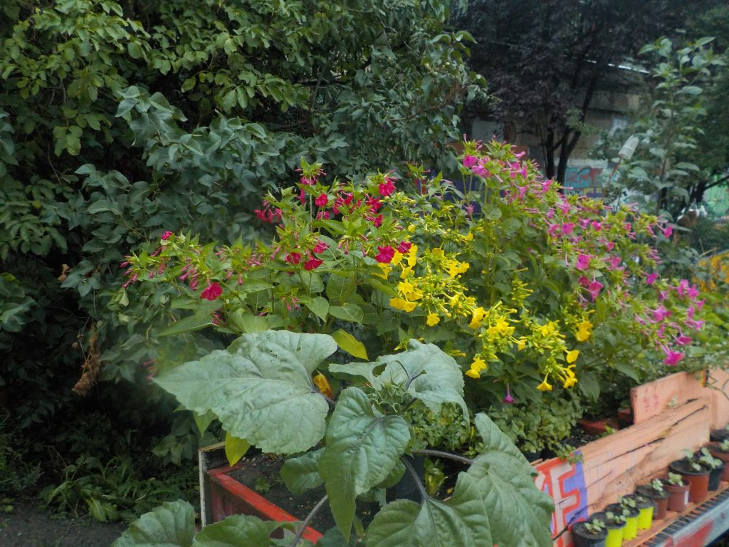 The picture shows flowers, vegetable, and herbs growing in a Vienna community garden on the Danube Canal.