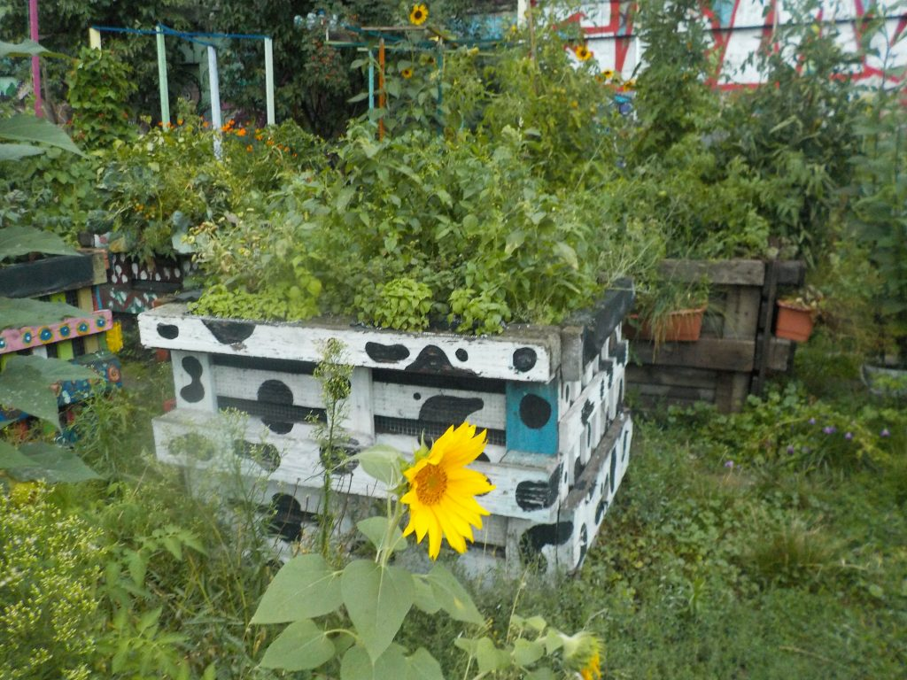 This picture shows a sunflower in the neighborhood garden with flower and vegetable beds behind it.