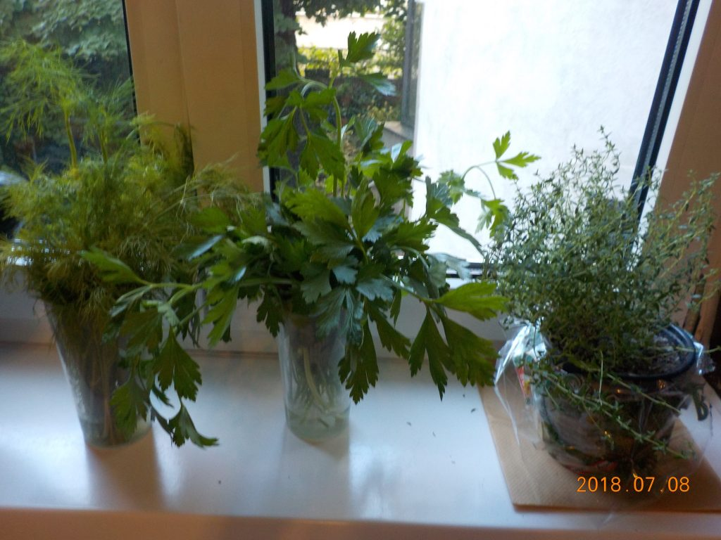 The picture shows an improvised mini-herb garden on a kitchen window sill: dill and parsley in water glasses next to a small pot of thyme.